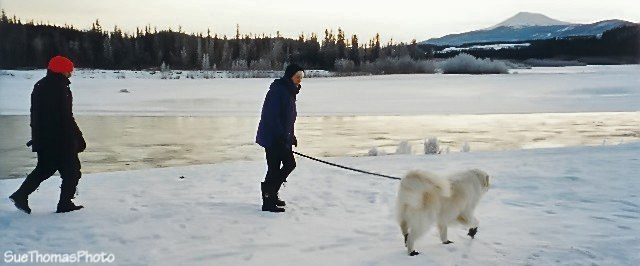 Walking along the Yukon River in Whitehorse, Yukon