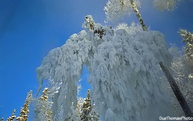 Frost at Liard Hot Springs, British Columbia
