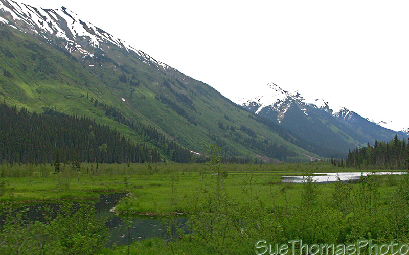 Scene from the Cassiar Highway, BC