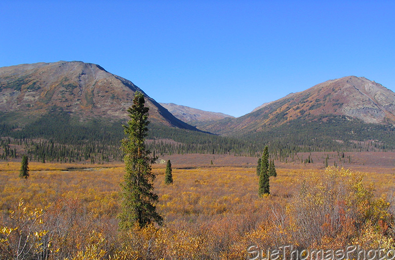 Fall colours on the Nahanni Range Road in Yukon