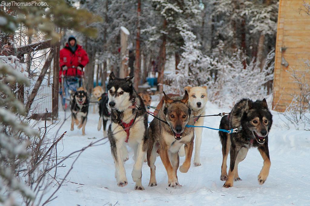 Dog Kennels In Dawson Creek Bc